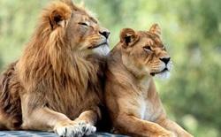 Để giữ lại vẻ đẹp, nhiều loài động vật dường như đang đi vào ngõ cụt của sự tiến hóa?
