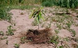 """Ecosia - công cụ tìm kiếm """"phủ xanh Trái Đất"""" vừa trồng thành công cây thứ 100 triệu"""