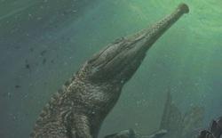 Machimosaurus rex: Loài cá sấu nước mặn to lớn nhất từng được con người phát hiện