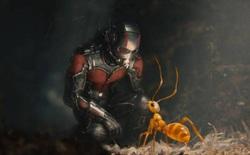 """Hóa thạch loài kiến địa ngục vừa được phát hiện tiết lộ cơ chế kẹp con mồi """"cực dị"""" so với loài kiến ngày nay"""