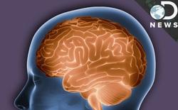 Khi một bệnh nhân được xác định chết não, họ đã thực sự chết hay chưa?