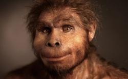 Các nhà khoa học phát hiện ra một tổ tiên bí ẩn của loài người, mang những gen chưa từng được xác định