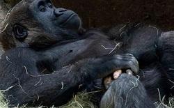 """Những lần di truyền lỗi ở động vật cho ra kết quả cực hiếm thấy: Khỉ """"tay người"""", vịt """"hoàng tộc"""", chó bạch tạng"""