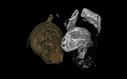 Nhà khoa học muốn để những xác ướp Ai Cập ngủ yên
