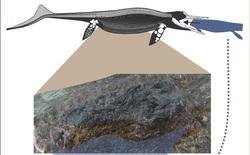 Loài bò sát biển cổ đại có thể nuốt chửng con mồi dài tới 4 mét