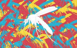 Bang Florida ở Mỹ chuẩn bị thả 750 triệu con muỗi biến đổi gen ra ngoài tự nhiên để tiêu diệt muỗi mang bệnh