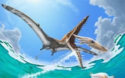 """Rhamphorhynchus: Loài thằn lằn bay """"tí hon"""" sở hữu hàm răng của tử thần"""