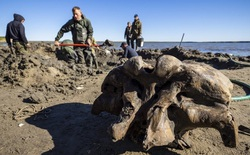Băng tan tại Bắc Cực để lộ hài cốt voi ma mút 10000 tuổi vẫn còn nguyên gân và da