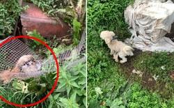 """Chó nhà mất tích được tìm thấy trong lò nhân giống trái phép, để rồi vạch trần cả một ngành công nghiệp tàn khốc trục lợi bằng """"chó thuần chủng"""" tại Bắc Âu"""