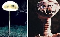 """Phát hiện loài bọt biển ET trong """"Khu rừng kỳ dị"""" ở Thái Bình Dương trông giống như một sinh vật ngoài hành tinh"""