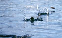 Thiên thạch nảy lên trong bầu khí quyển Trái đất như một viên đá lia trên mặt nước