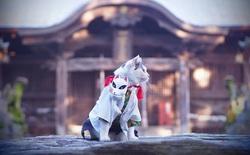 """Chú mèo bỗng chốc trở thành """"người nổi tiếng"""" vì được chủ nhân cosplay thành của các nhân vật anime nổi tiếng"""