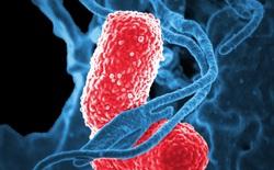 Một vi khuẩn tưởng chừng vô hại trong khoang miệng có thể thúc đẩy sự tiến triển của ung thư