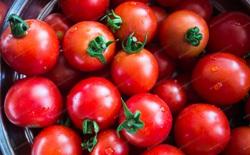 Cà chua là trái cây hay rau? Câu hỏi tưởng đơn giản nhưng hành trình tìm đáp án lại phức tạp đến không ngờ