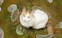 Nghiên cứu: Một chủng vi khuẩn trên mèo có liên quan đến nguy cơ ung thư não trên người