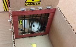 Cưng xỉu với màn giải mã mê cung của chú chuột hamster, vừa đáng yêu vừa gay cấn như series Vượt ngục