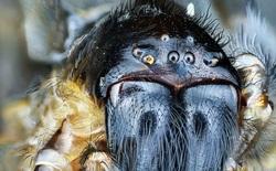 Tại sao nhiều người lại mắc chứng sợ nhện và liệu có thể chữa được nỗi sợ này không?