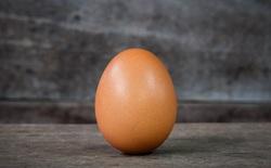 Các nhà nghiên cứu tìm ra công thức toán học chung để mô tả mọi quả trứng chim có trong tự nhiên