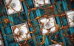 """Samsung muốn """"copy và paste"""" não bộ con người lên chip, và họ đã phát triển được phương pháp làm điều đó"""