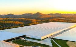 Tương lai của nông nghiệp bên trong nhà kính lớn nhất nước Mỹ: Sử dụng robot, AI và dữ liệu để trồng 22.500 tấn cà chua mỗi năm