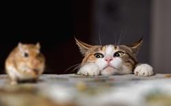 Tìm ra giải pháp khoa học khiến mèo bớt tha mấy con vật chết về nhà