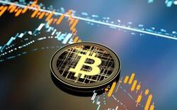 Không tìm thấy đỉnh, Bitcoin tăng lên gần 55.000 USD, vốn hoá chính thức cán mốc 1 nghìn tỷ USD