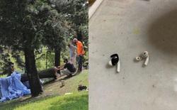 Bị cây đè chết khi đeo tai nghe chống ồn chạy bộ buổi sáng