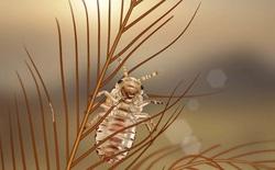 Phát hiện ra loài bọ nguyên thủy dám ăn cả lông của khủng long