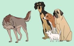 Chó đã làm bạn với con người từ ít nhất 23.000 năm trước