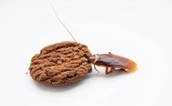 Trong cà phê, bột mì, sô cô la, nước cam… đều có lông chuột, xác bọ rệp và giòi