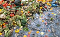 Hơn 10 tấn thực phẩm bị vứt bỏ ở một khu chợ Ấn Độ mỗi ngày, các kỹ sư đã tìm cách biến chúng thành năng lượng hữu ích