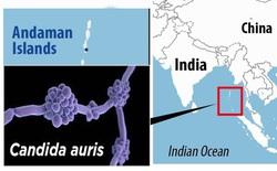 Bí ẩn về chủng siêu nấm kháng thuốc trên đảo hoang và nguy cơ xuất hiện vô số mầm bệnh mới