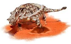 Giáp long đuôi chùy - Ankylosaurid có thể là một loài ưa thích đào bới