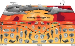 """Phải mất 10 triệu năm sự sống trên Trái Đất mới có thể phục hồi sau sự kiện """"The Great Dying"""""""