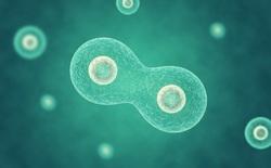 Đột phá: Các nhà khoa học vừa tạo ra được sinh vật nhân tạo đầu tiên có khả năng phân bào