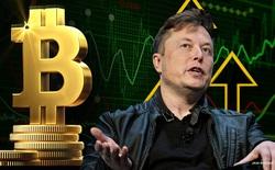 Elon Musk vừa 'giải cứu' Bitcoin: Đăng đàn cải chính được vài phút, giá lập tức gượng dậy trở lại