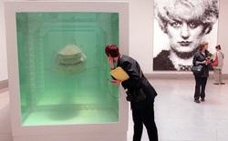 Sự giống nhau kỳ lạ giữa Bitcoin và xác con cá mập nằm trong bể foocmôn