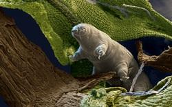 Hết bị bắn đi với tốc độ 900m/giây, giờ 5000 con gấu nước lại lên vũ trụ thí nghiệm cùng với 128 con mực phát sáng