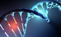 Các nhà nghiên cứu tại Harvard phát triển thành công cách thức chỉnh sửa gen mới hữu hiệu hơn cả CRISPR