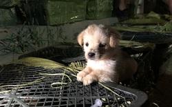 Sự thật tàn ác phía sau cơn sốt 'hộp mù' online ở Trung Quốc: Bán cả thú cưng còn sống