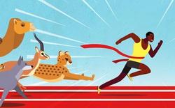 Không phải báo săn, con người mới là nhà vô địch giải chạy giữa các loài động vật
