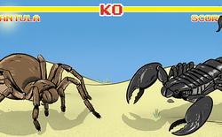 Bọ cạp đối đầu nhện tarantula, kẻ nào sẽ chiến thắng? Các nhà khoa học đã có câu trả lời