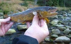 Cá hồi đang trở nên nghiện ngập vì nước thải con người đổ ra tự nhiên chứa dư lượng ma túy đá