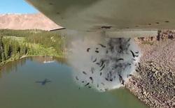 Lý do bất ngờ đằng sau video máy bay Mỹ thả hàng vạn con cá xuống vùng núi hẻo lánh