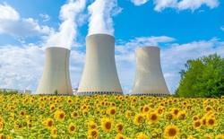 Tại sao các nhà khoa học trồng hoa hướng dương sau thảm họa hạt nhân?