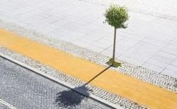 Điều gì sẽ xảy ra nếu cả thành phố chỉ còn đúng 1 cây xanh?