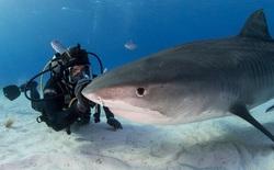 Kẻ săn mồi trở thành con mồi: Hàng trăm triệu con cá mập đối mặt với các chuyến đi săn đẫm máu của con người mỗi năm