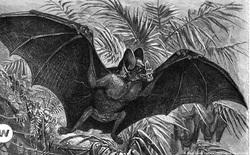 Phát hiện vết tích của dơi ma cà rồng khổng lồ 100.000 năm tuổi trong hang đá cổ