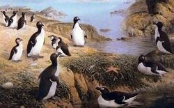 """Bắc Cực cũng có """"chim cánh cụt"""", vậy giờ chúng đang ở đâu?"""