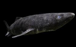 """10 loài động vật sống lâu nhất hành tinh, thọ như các """"cụ rùa"""" còn chưa được vào danh sách"""